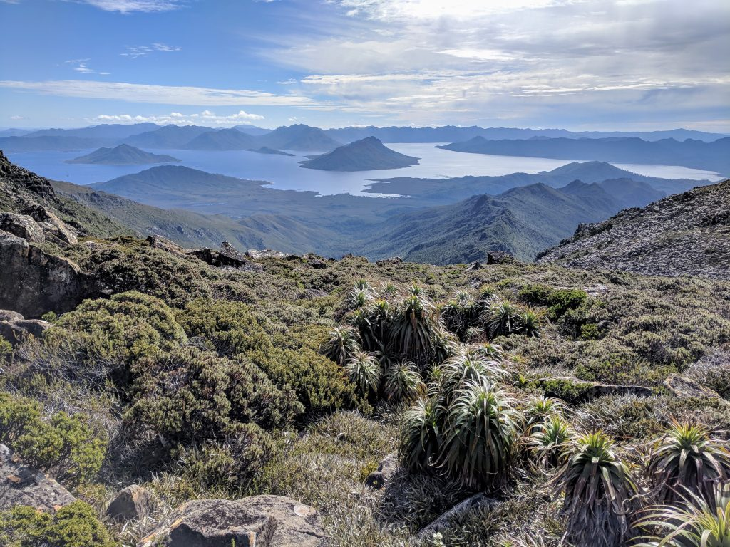 Lake Pedder and pandani (plants) viewed from near Mt Anne, Southwest National Park, Tasmania