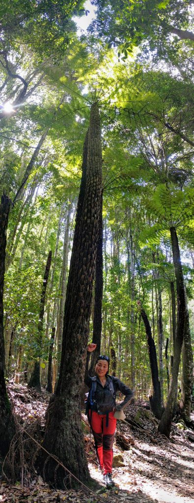 Sophia dwarfed by an extremely tall tree fern, Ruined Castle/ Mt Solitary Track, Blue Mountains National Park