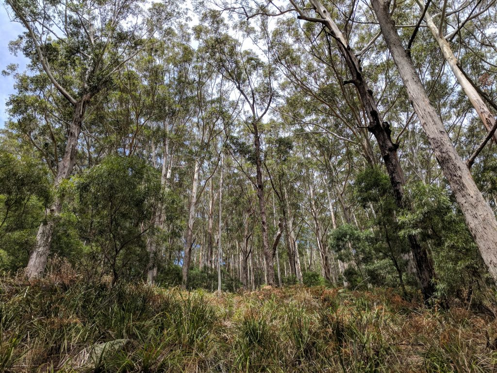 Wodi Wodi Track, Stanwell Park NSW