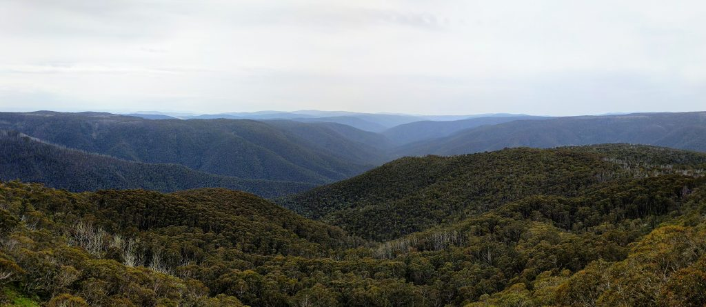 Mount Tabletop Track, Alpine NP Victoria