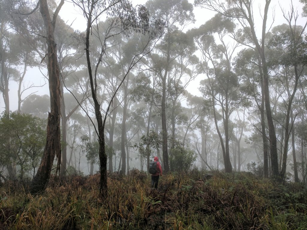 Butterbox Point Track, Blue Mountains