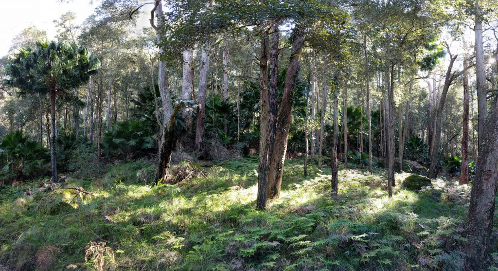 Wallumarra Track & the Forest Path, RNP