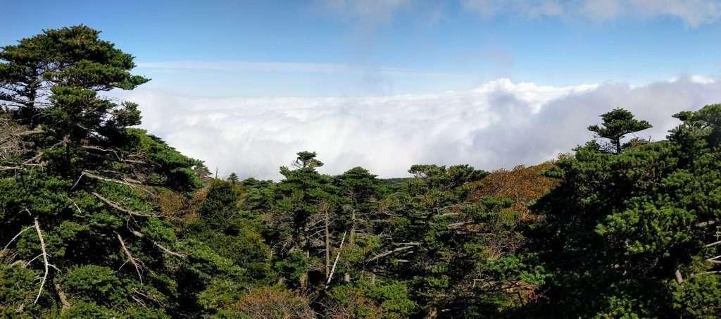 Gwaneumsa Track, Hallasan, Jeju-do