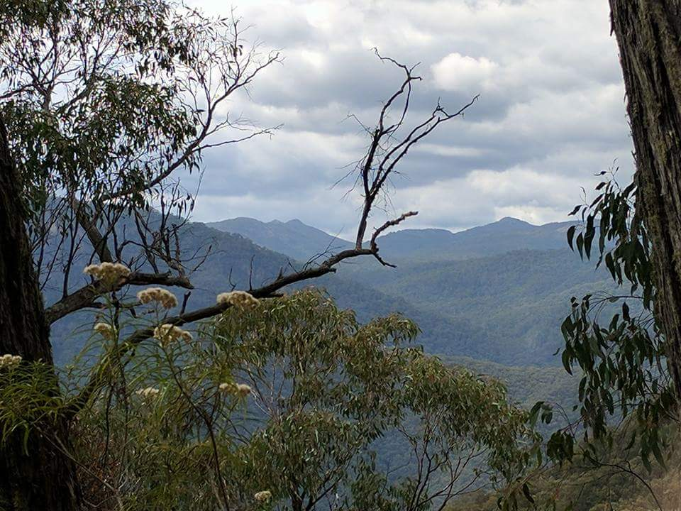 Old Mountain Road Track, Kosciuszko NP NSW