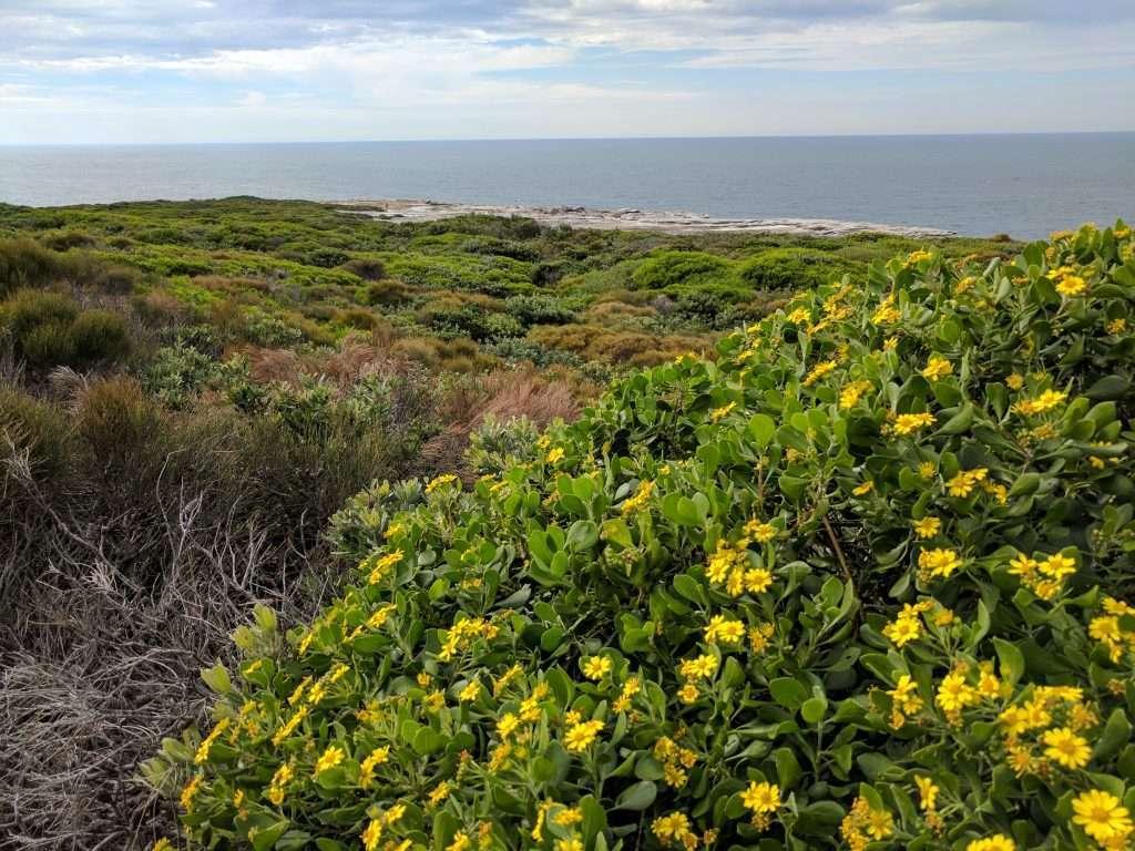 Cape Bailey Circuit, Kamay Botany Bay NP