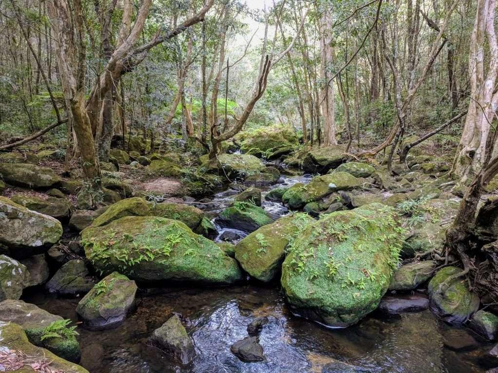 Mt Kuring-gai to Berowra, Sydney