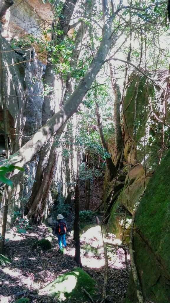 Mount Bushwalker Track