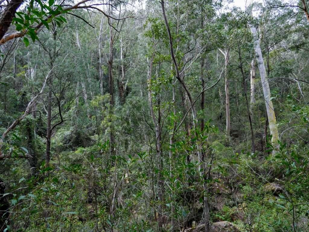 Starlights Trail, Nattai National Park