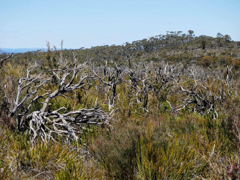 Plateau Walk & Cottage Rock Track, Kanangra-Boyd NP