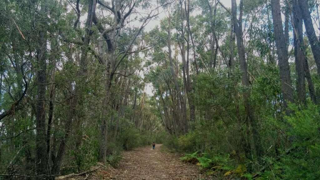 Wombat Hill Track (maybe), Morton National Park NSW