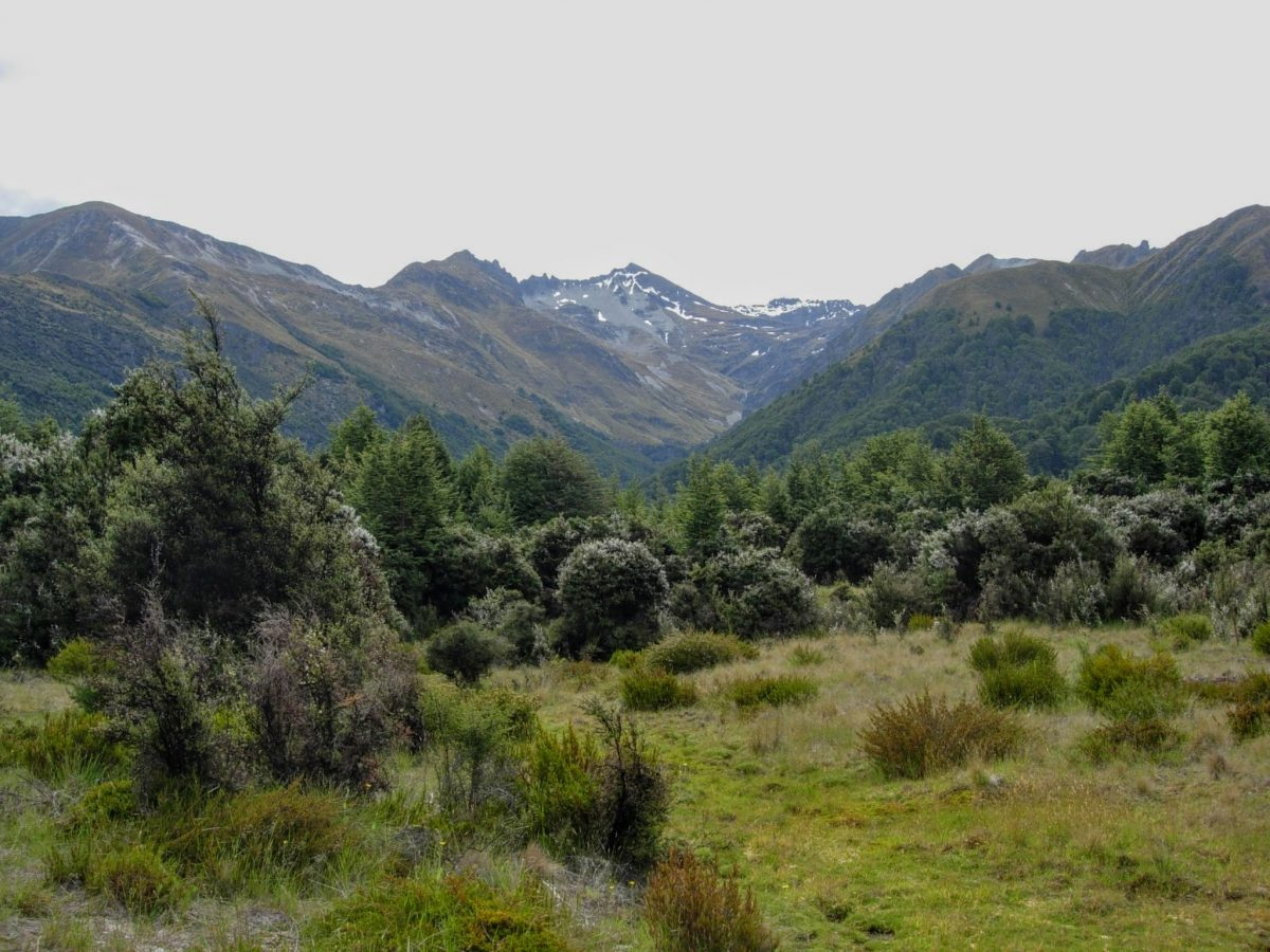 Mt Crichton Loop Track & Lake Dispute, near Queenstown NZ
