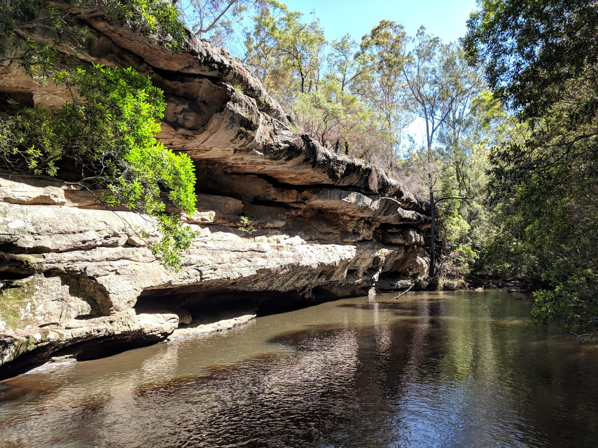 Bomaderry Creek Circuit, Bomaderry Creek Regional Park NSW