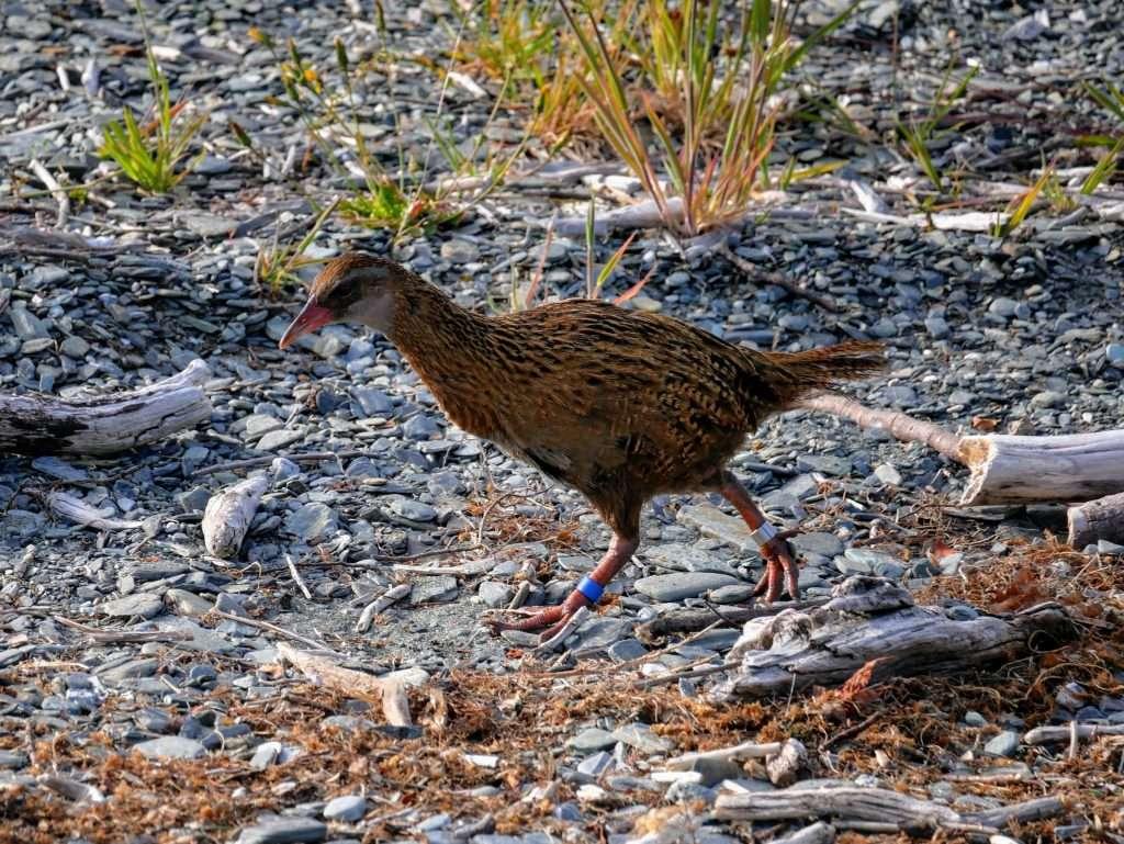 Pigeon Island Summit Track, Lake Wakatipu