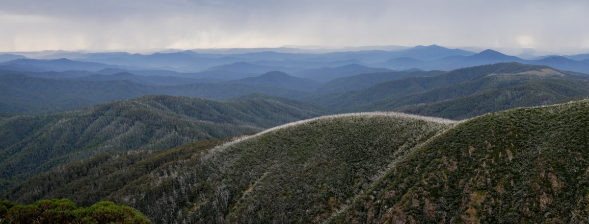 Mt Bogong Ascent, Victorian Alps