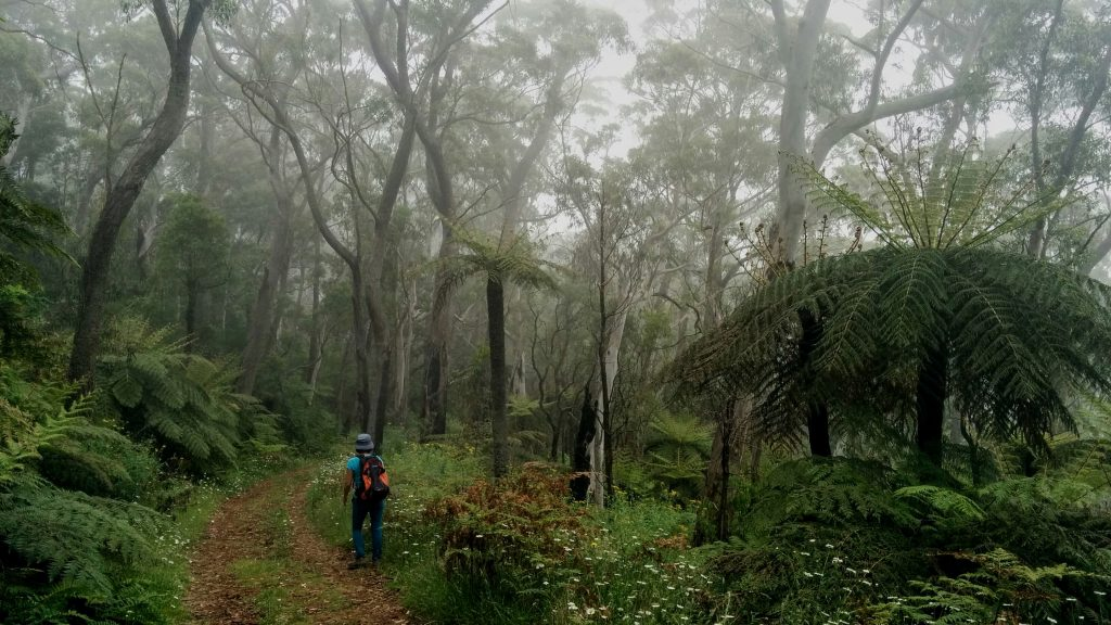 Wollangambe Track, Mt Wilson, Wollemi National Park NSW