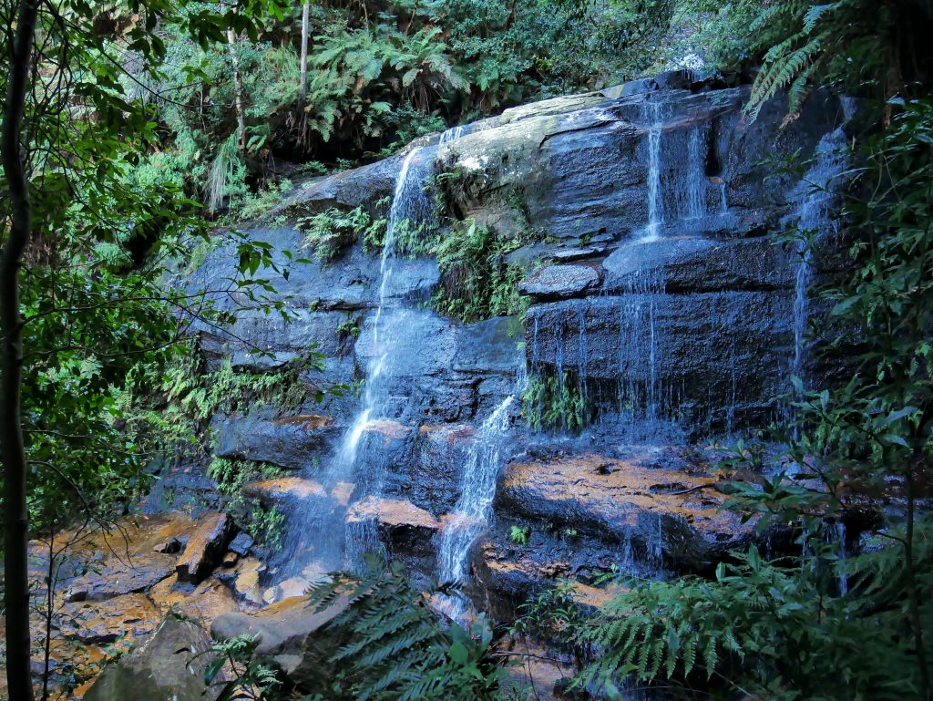 Wentworth Falls Circuit via Hippocrene and Vera Falls, Blue Mountains NSW
