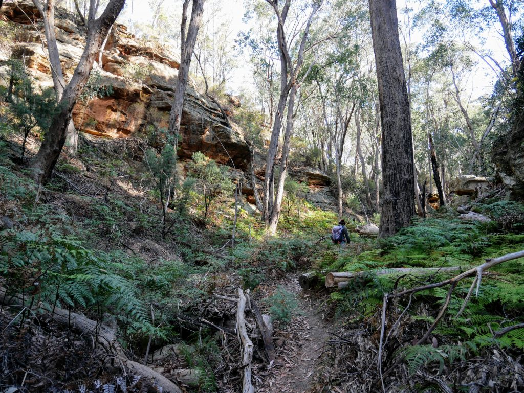 Ferntree Gully Reserve, near Rylstone NSW