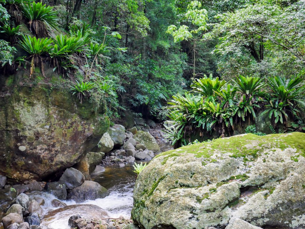 Minnamurra Rainforest Track & Minnamurra Falls