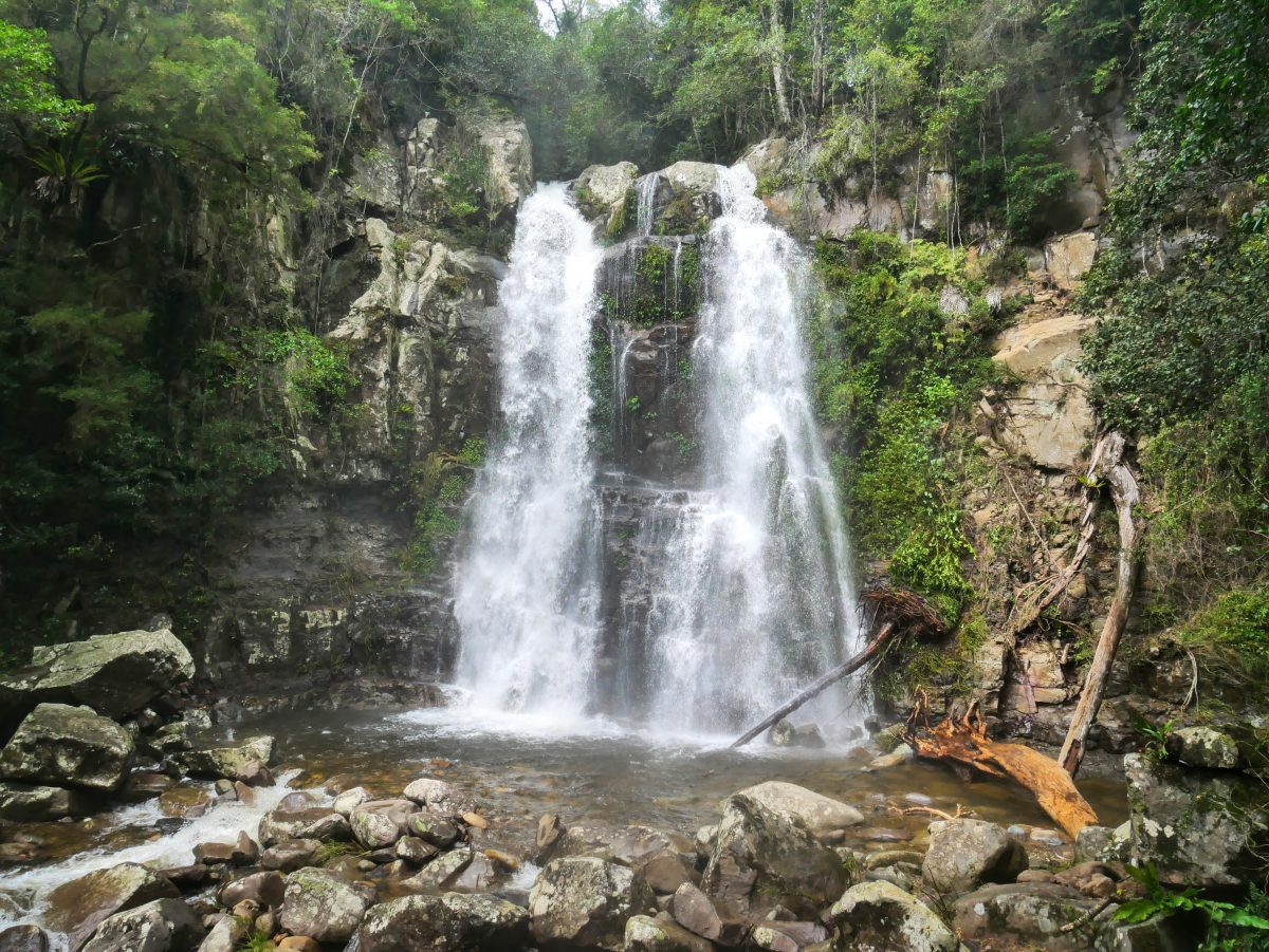 Minnamurra Rainforest and Falls Walk, Budderoo National Park NSW