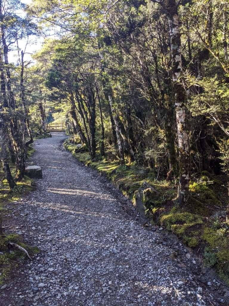 Devils Punchbowl Track, Arthur's Pass National Park