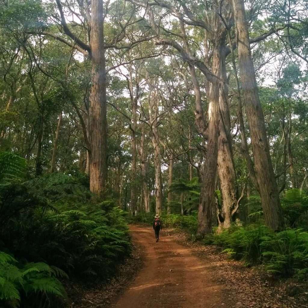 Gerringong Falls Circuit, Budderoo National Park