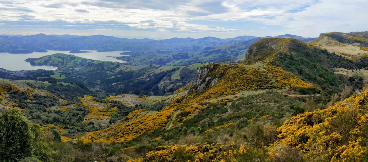 Hinewai Reserve & Stony Bay Peak, Banks Peninsula, Canterbury NZ