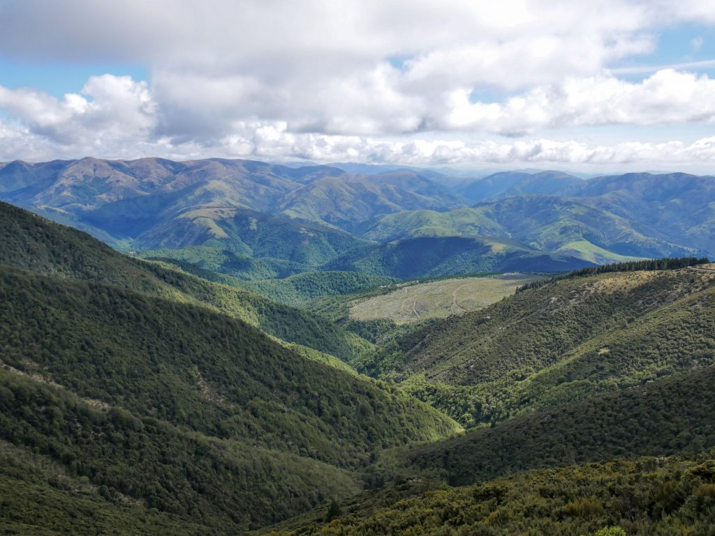 Mt Thomas Circuit, Mt Thomas Forest Conservation Area, Canterbury NZ