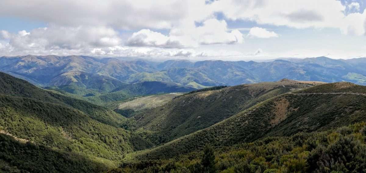 Mt Thomas Circuit, Mt Thomas Forest Conservation Park, Canterbury NZ