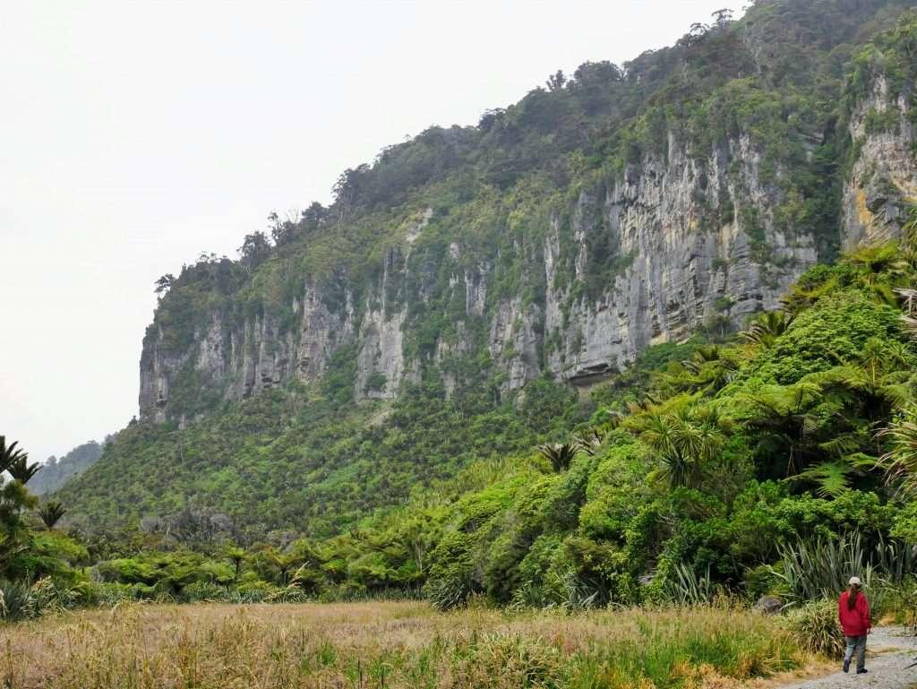 Pororari River Track to Lookout, Paparoa National Park