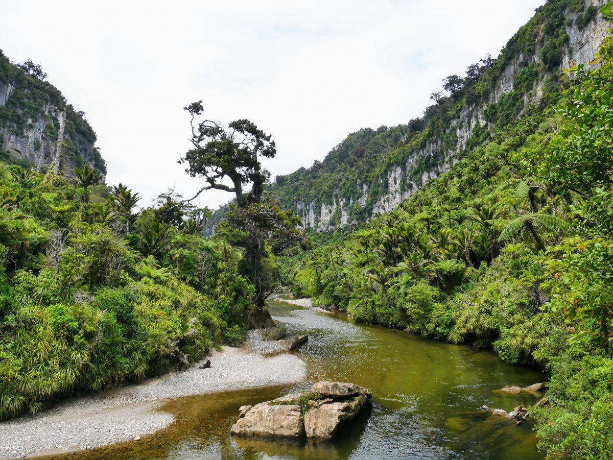 Pororari River Track short walk, Paparoa National Park, Westland NZ