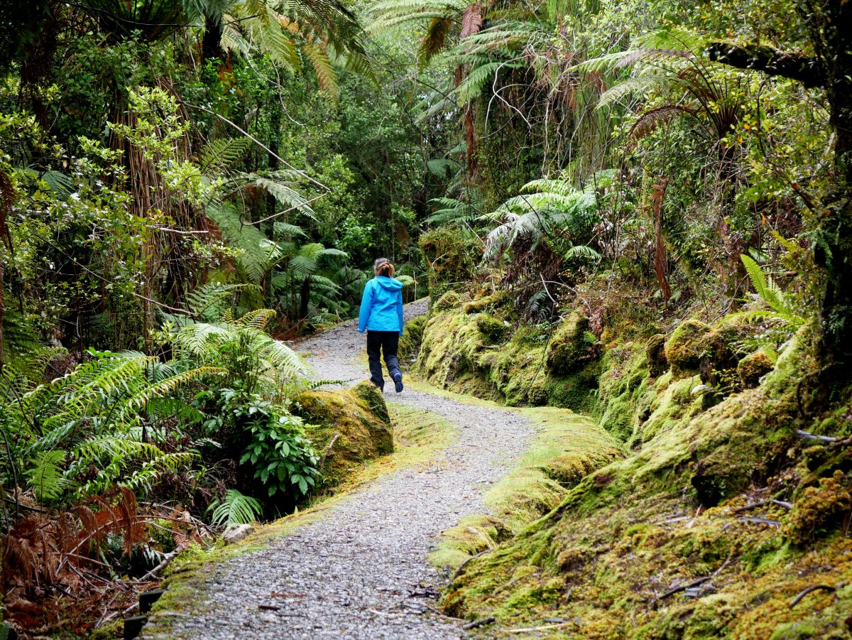 Pakihi Walk, Westland Tai Poutini National Park NZ