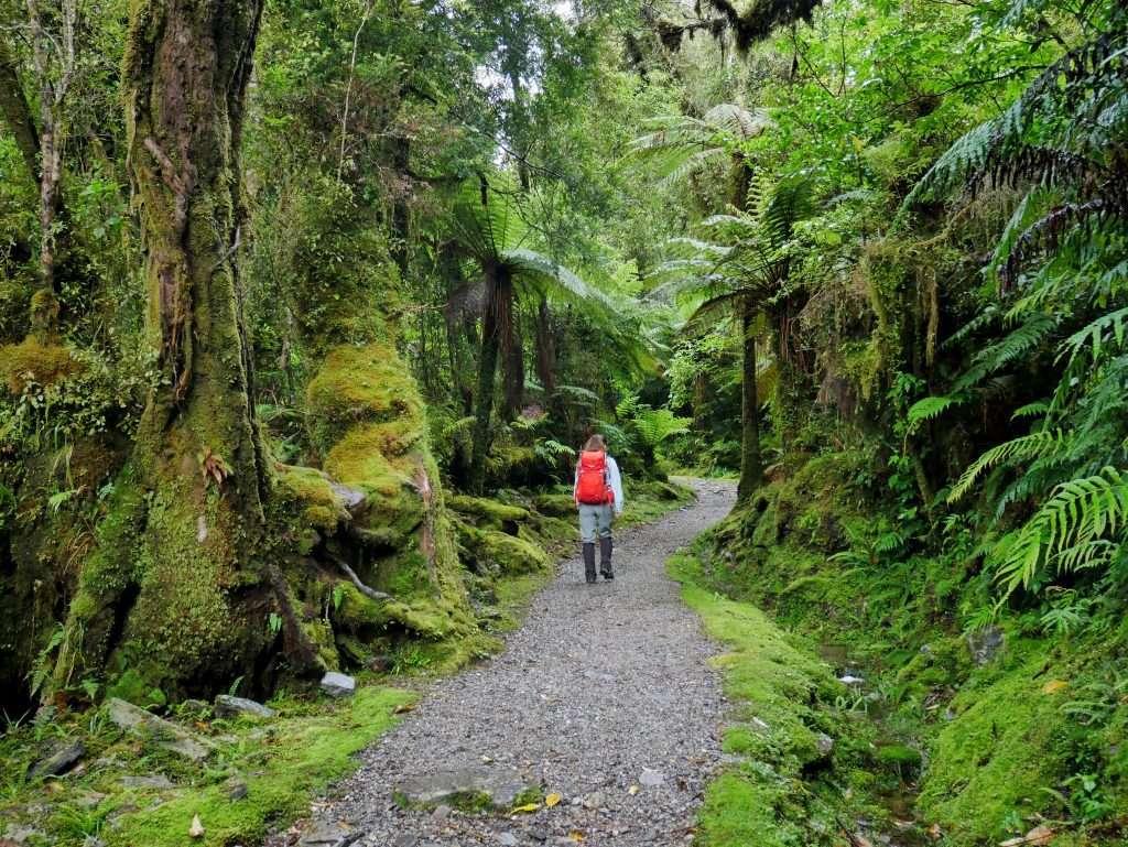 Alex Knob and Lake Wombat, Westland Tai Poutini National Park
