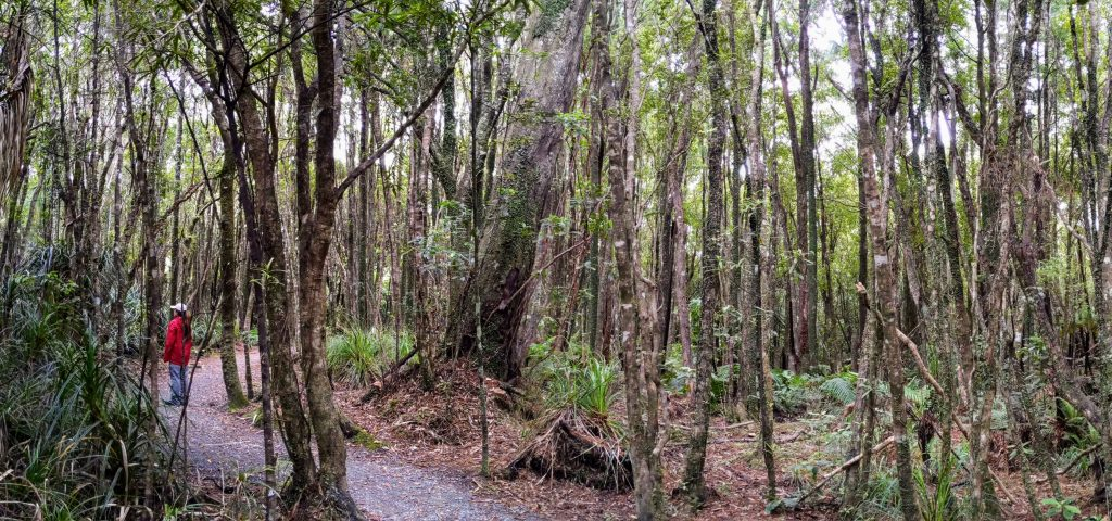 Truman Track, Paparoa National Park