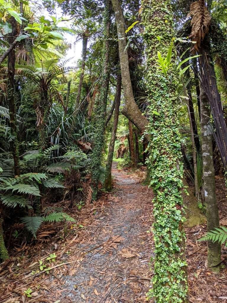 Truman Track, Paparoa National Park