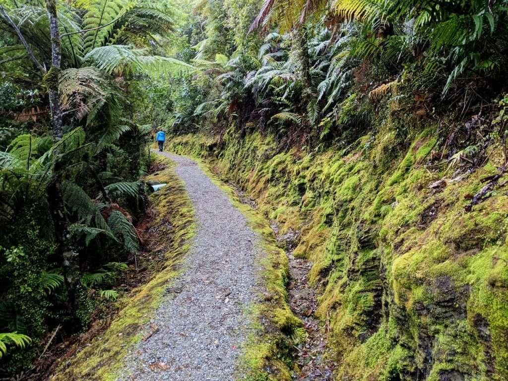 Pakihi Walk, Westland Tai Pouhini National Park