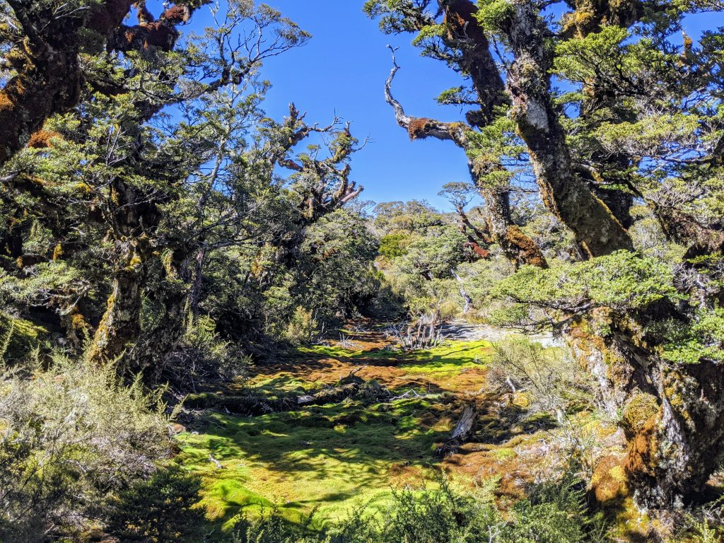 Key Summit Track & Lake Howden, Fiordland National Park NZ