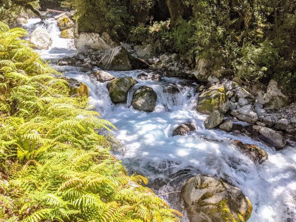 Lake Marian Track, Fiordland National Park