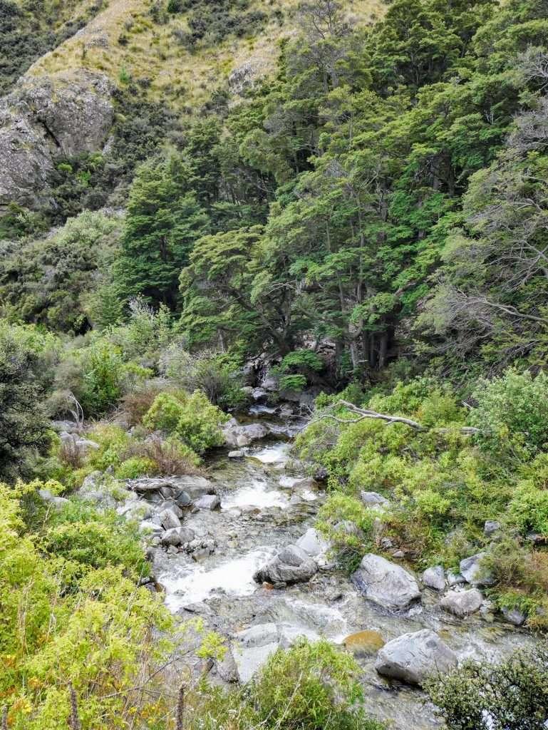 Greta Track and Ben Ohau, Ruataniwha Conservation Park