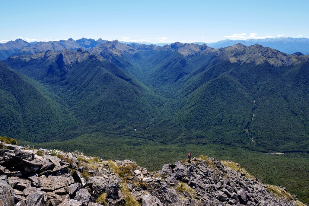 Mt Haast Route, Victoria Forest Park