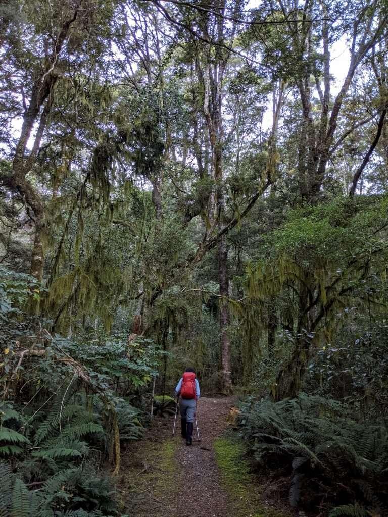 Mt Shrimpton Track to Tarns, McKerrow Range
