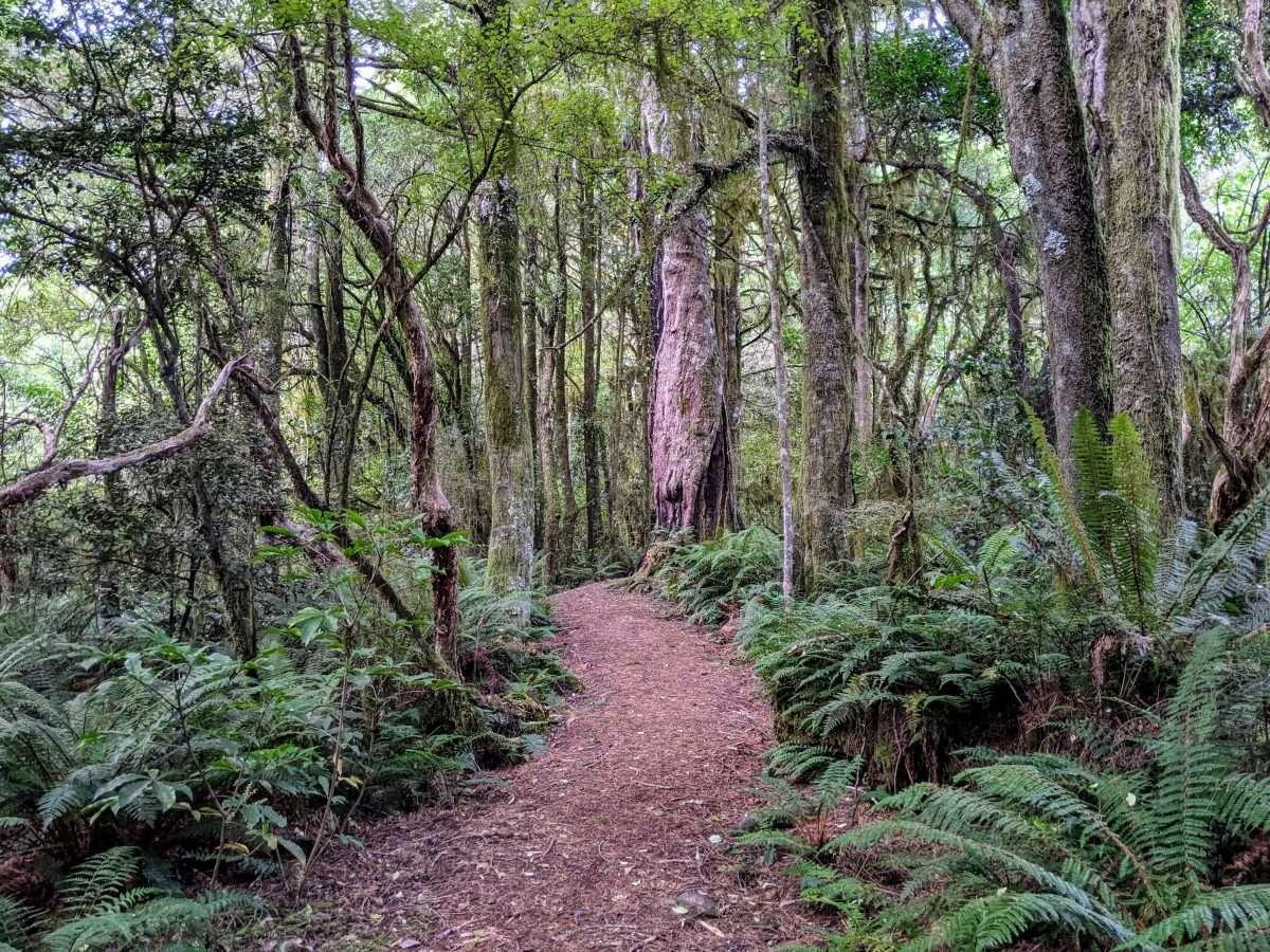 Makarora Bush Nature Walk, Haast Highway NZ