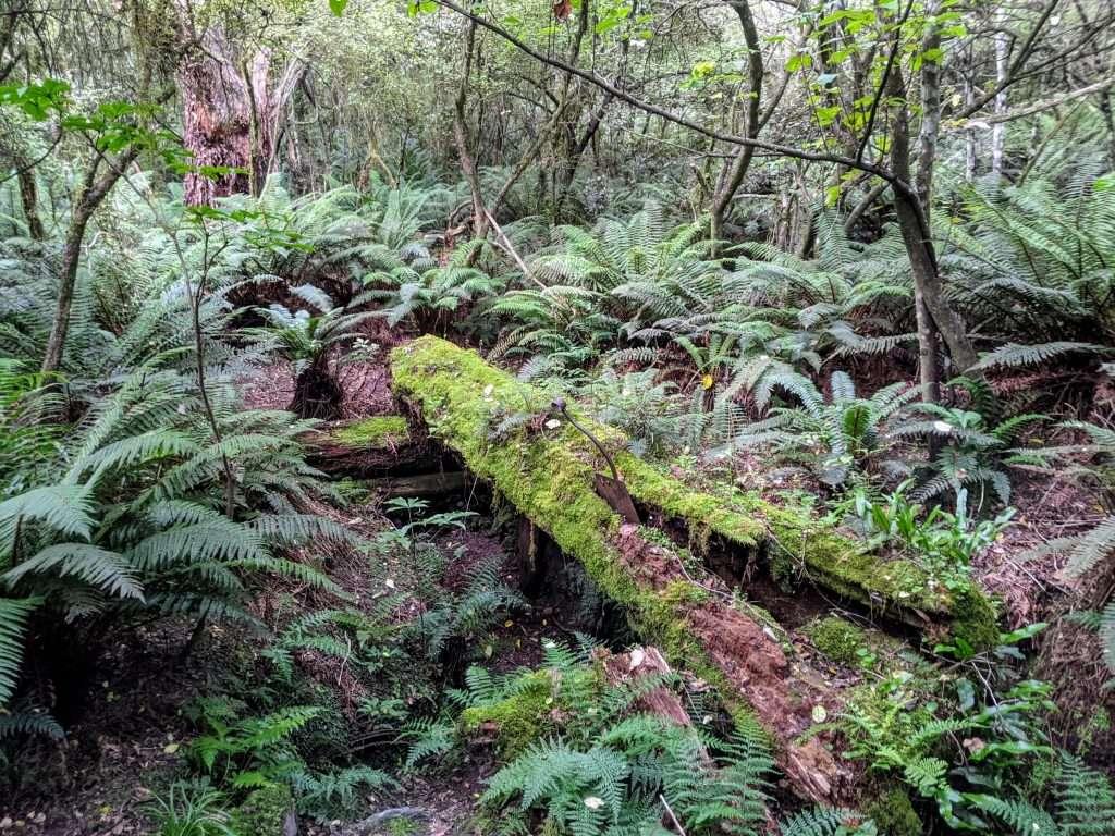 Makarora Bush Nature Walk
