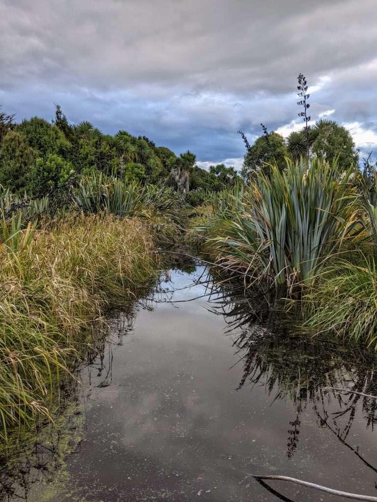 Travis Wetland Circuit, Christchurch