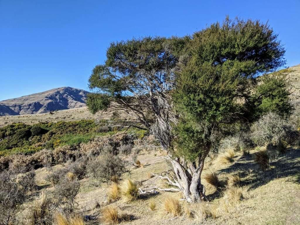 Mt Herbert from Diamond Harbour, Banks Peninsula