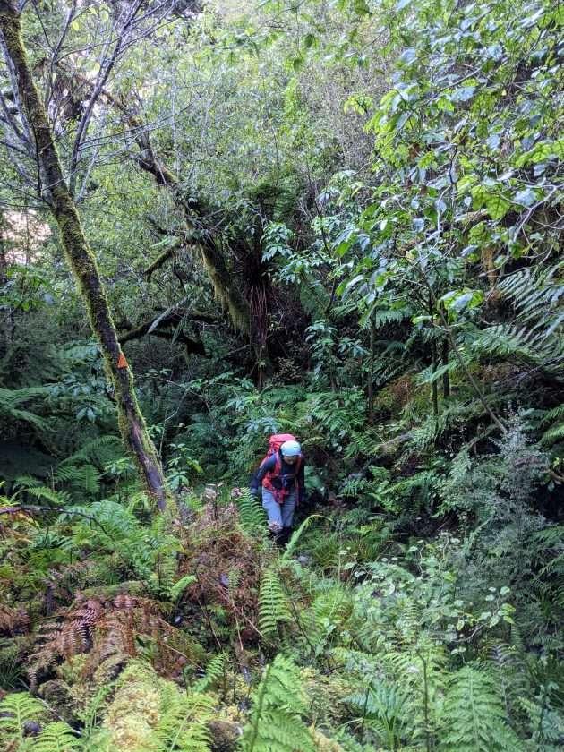 Kellys Hill via Carroll Hut, Arthur's Pass